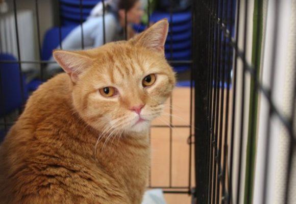 Хуже зверей: на Виноградаре орудует живодер, убивающий кошек