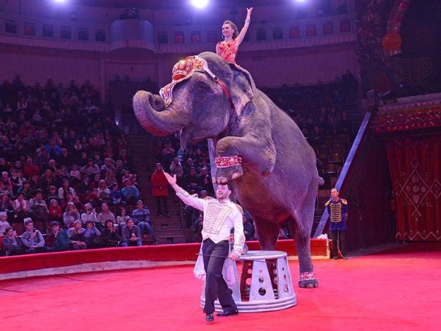 В Гомеле во время гастролей умерла слониха из Национального цирка Украины